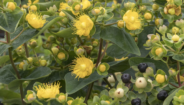 FloralBerry%E2%84%A2-Champagne-St-resize-700x400