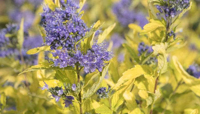 La-Barbe-Bleue%E2%84%A2-Bluebeard-resize2-700x400