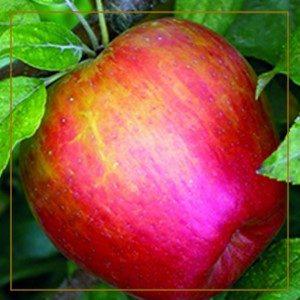 apple-150x150@2x