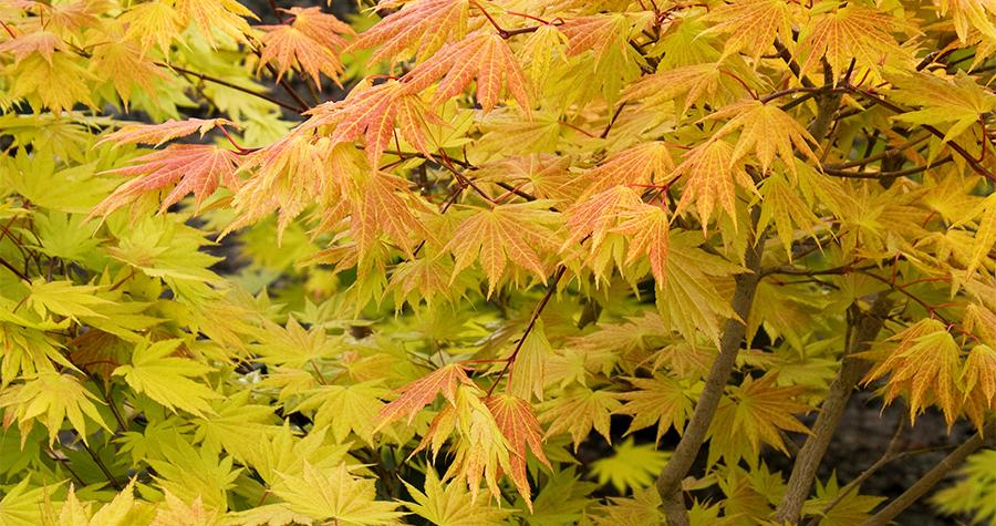 autumn-moob-900x475