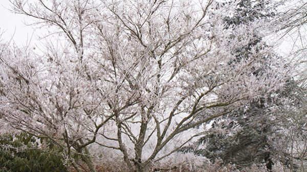 A tree in the midst of winter