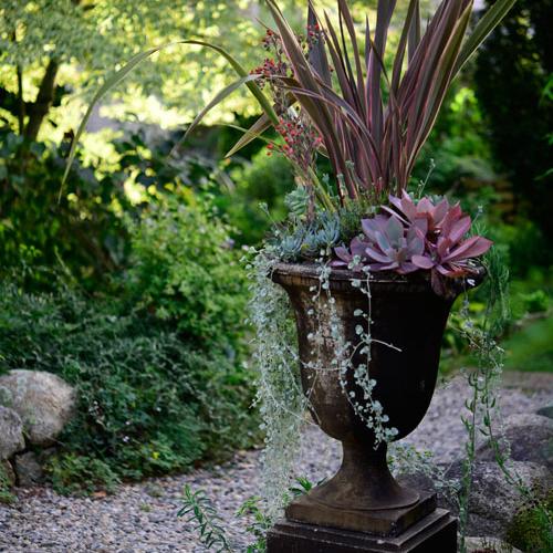 blackurnsucculents