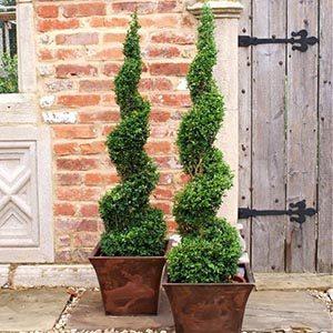 boxwoodtopiary300x300-150x150@2x