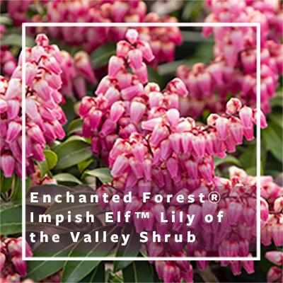 enchanted-forest_impish-elf_400x400