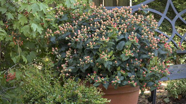 floralberryhorizontal600x335-300x168@2x