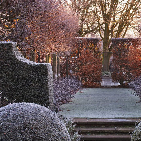 Frost covering a garden