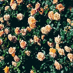 gardensuncropped