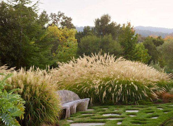 grasses600x435-1-300x218@2x