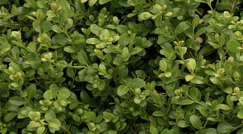 green-beauty-800x444