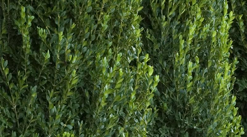 greenmountain800x444