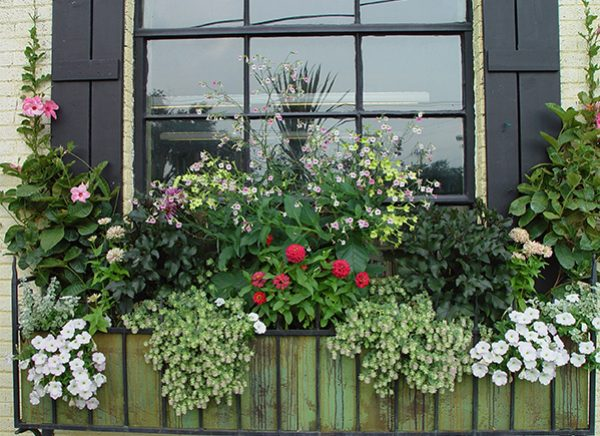 majestic-window-box-dirt_window-box-flowersv1-300x218@2x