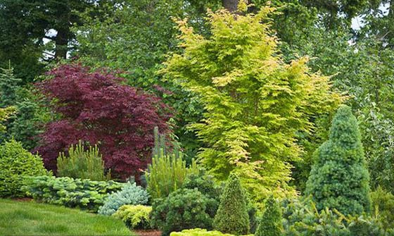 Dwarf Conifers Offer Big Solutions Be Inspired