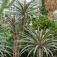 palmfl