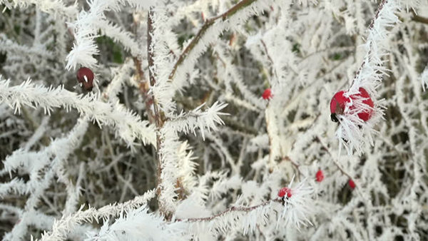 rime-frost-600x335-300x169@2x