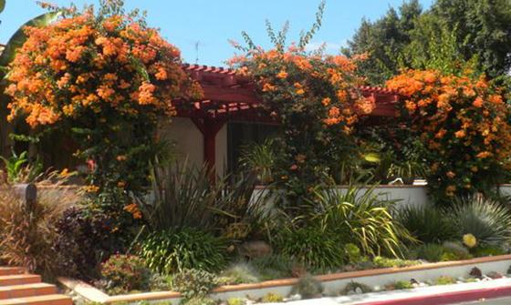 royal-orange-bougie-shut-the-front-door