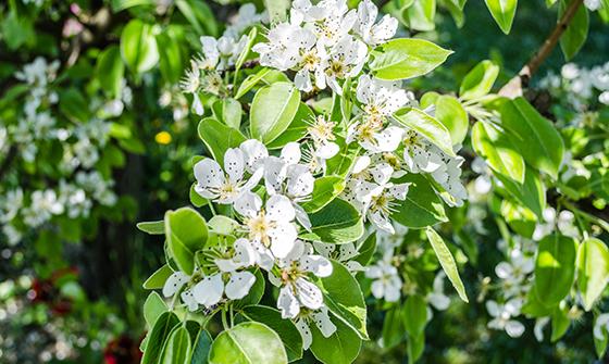 shutterstock_429691108-a-tree