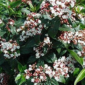 spring-bouquet-300x300