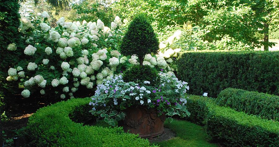 topiaryinlargepot900x475