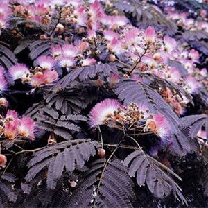 Summer Chocolate Mimosa