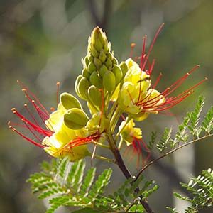 yellowflowercropped300x300-150x150@2x
