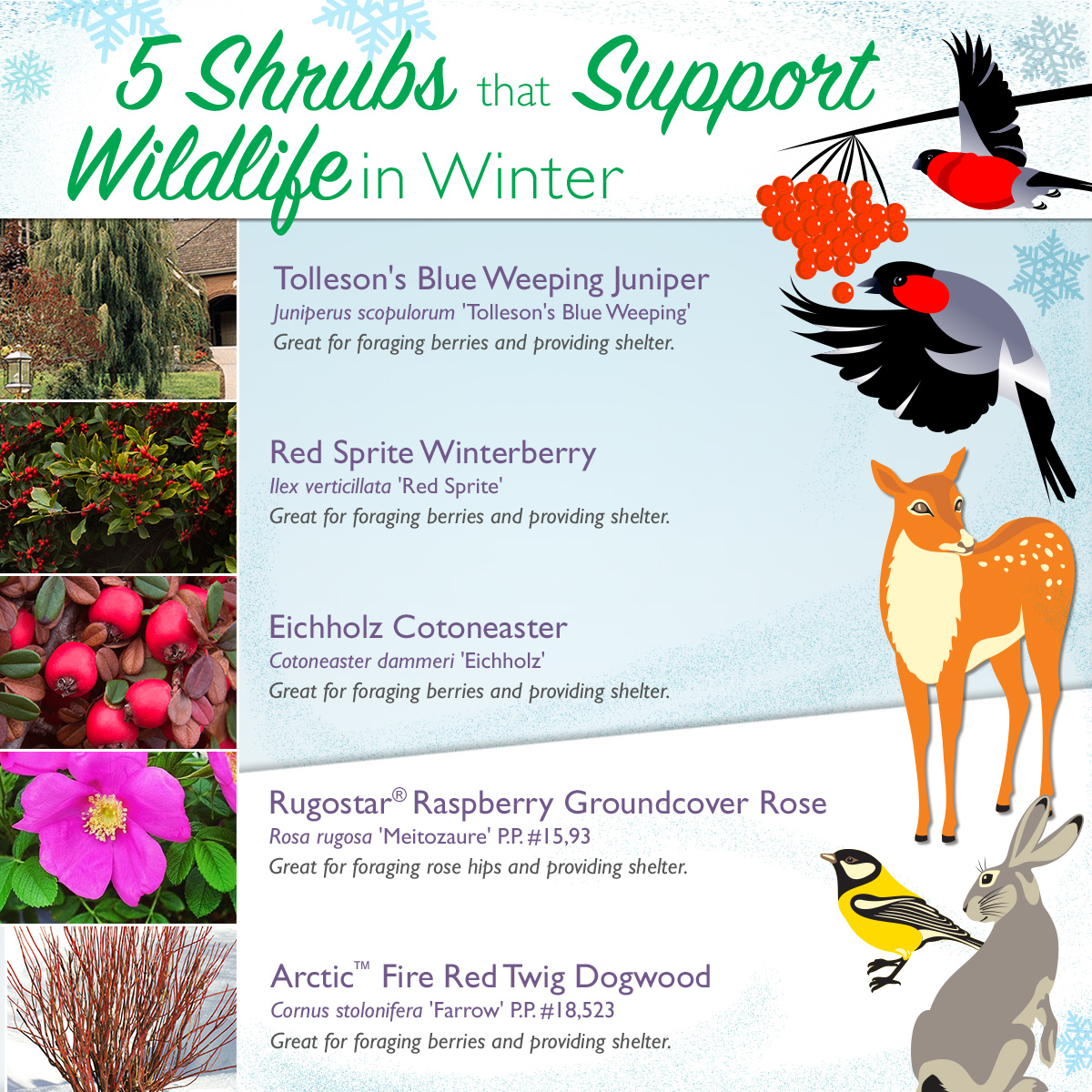 Wildlife Shrubs