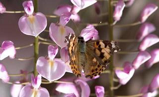 birds butteflies