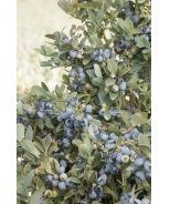 Bountiful Blue® Blueberry
