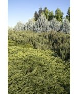 Calgary Carpet® Juniper