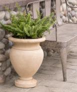 Emerald Vase Fern
