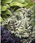 Pewter Lace Painted Fern