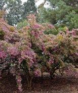 Razzleberri® Fringe Flower