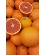 Cara Cara Pink Navel Orange
