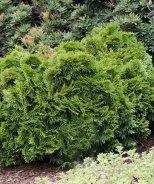 Grune Kugel Western Red Cedar