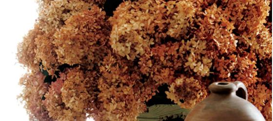 florals-dried-hydrangeas560x250