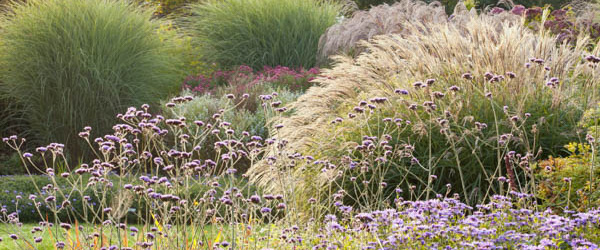 5 Ways To Design With Ornamental Grasses Grow Beautifully