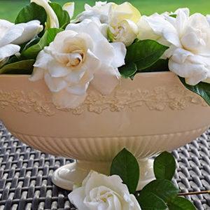 gardeniainwedgewarebowlcropped300-150x150@2x