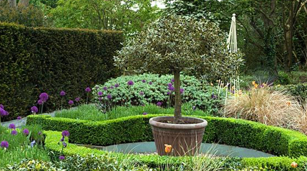 Walled parterre garden, border with Alliums Sarcococca grasses and standard holly in a container
