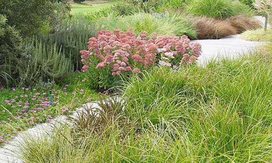 plantsavvysept16nearlywildsedums560x335