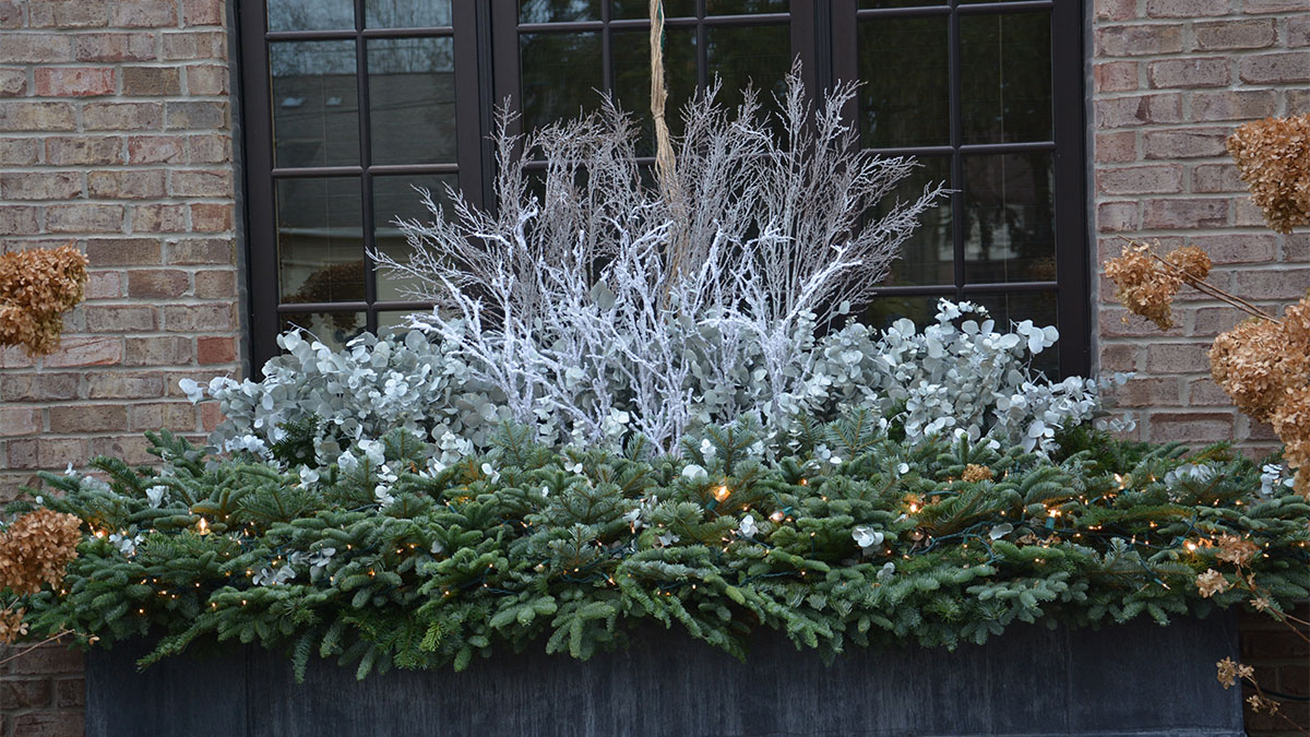 Winter Windowboxes Find Your Style – Grow Beautifully