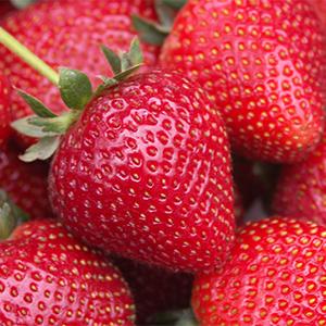 strawberry300x300