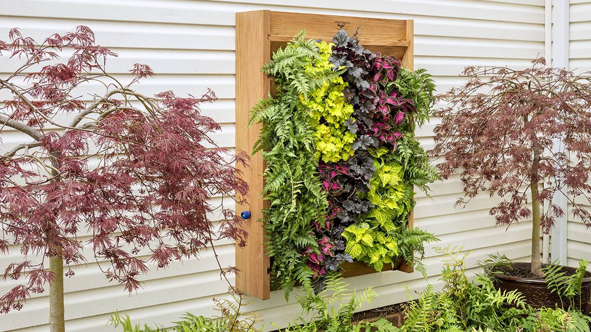 Fill A Shady Wall With Color Grow Beautifully