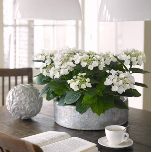 hydrangeas-floral-arrangements-table-decorations-centerpieces-10500x500