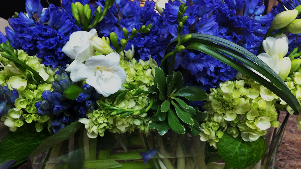 Making Arrangements Hydrangeas Grow Beautifully