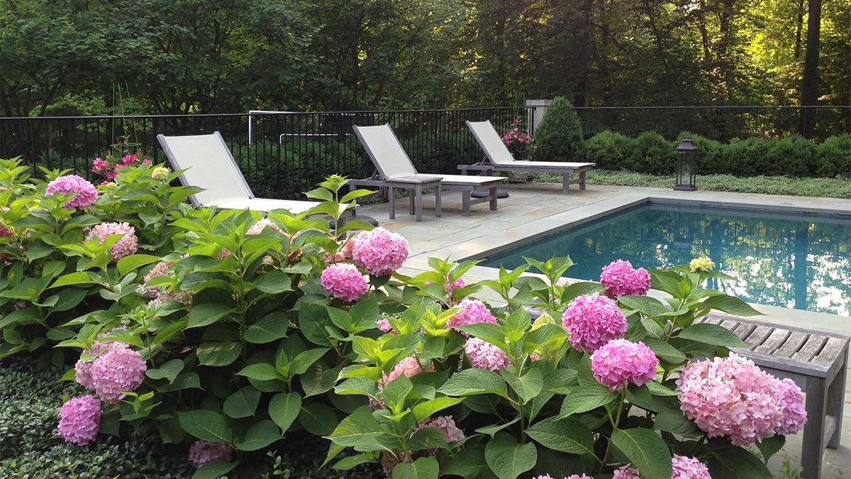 Make A Splash With Poolside Plants Z 3 7 Grow Beautifully