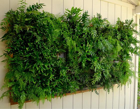 verticalgarden 560x435