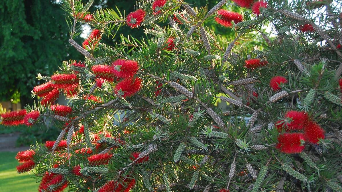 Southwest 5 Shrubs That Look Great In August Zone 6 10 Grow