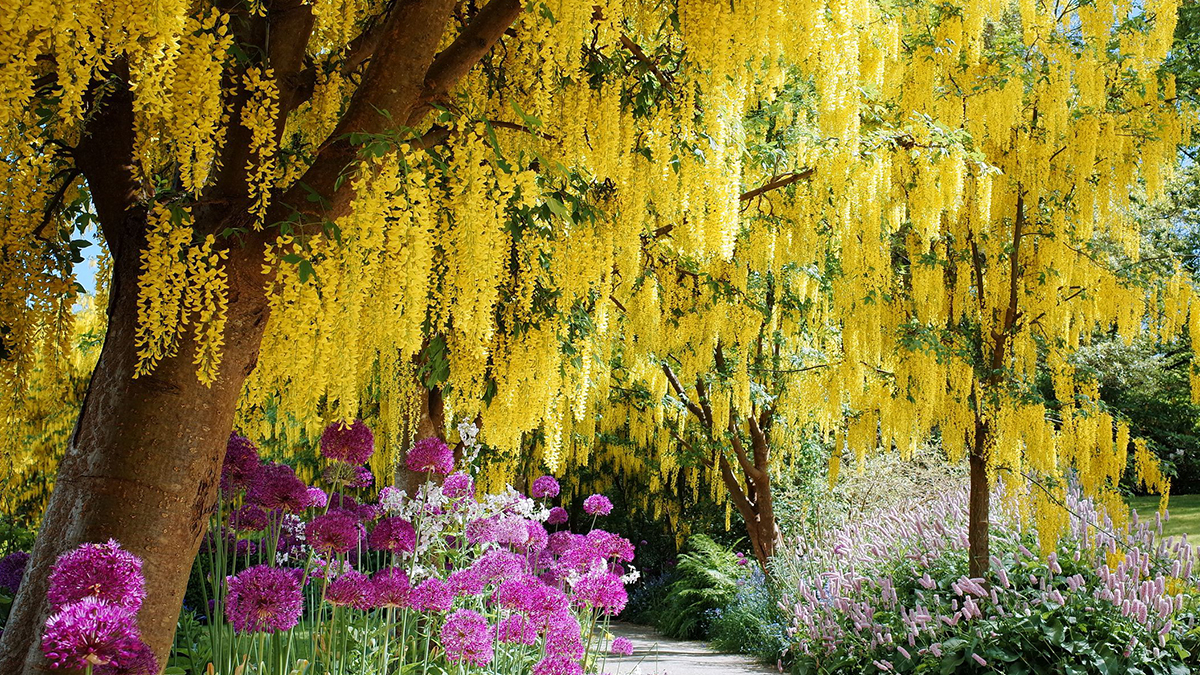 Top 13 Flowering Trees For Small Gardens Grow Beautifully