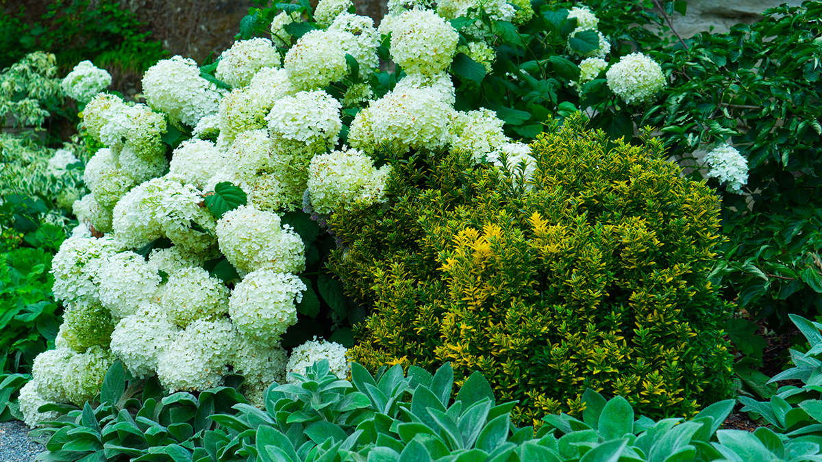 12 Perfect Plants For East Facing Borders Grow Beautifully