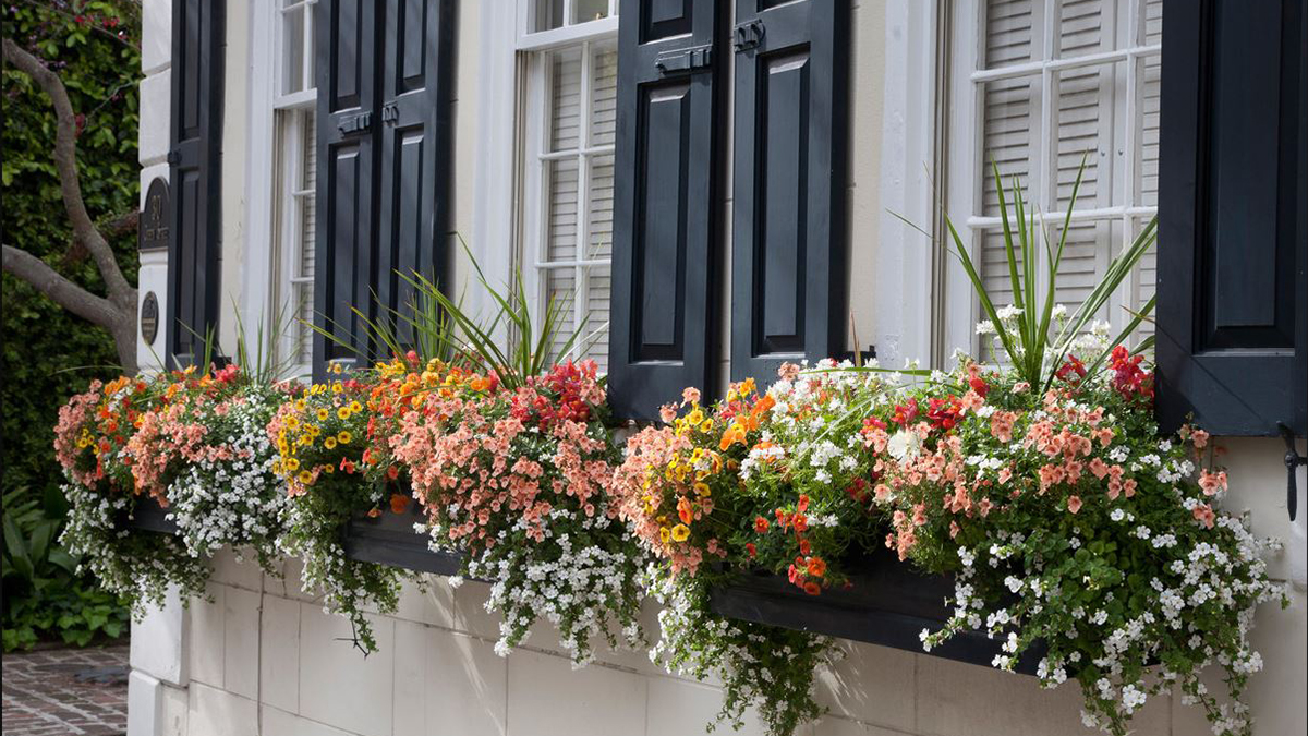 6 Fresh Ideas for Summer Windowboxes – Grow Beautifully