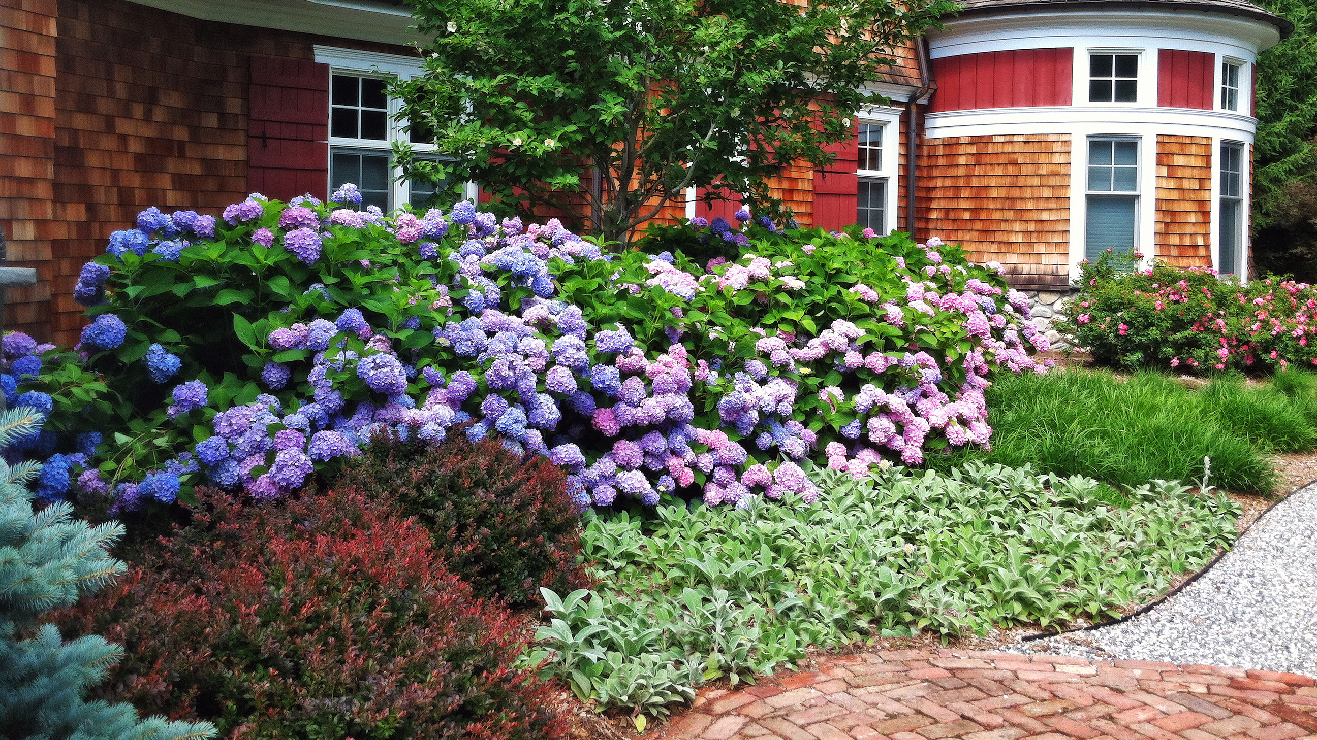 Mid Sized Shrubs For A Layered Border Grow Beautifully